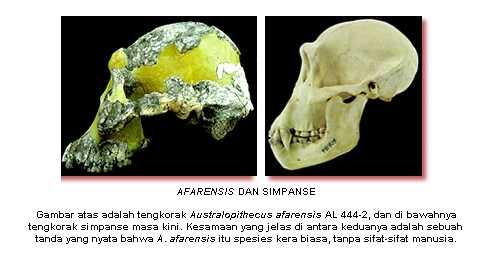 harun-yahya-e28093-menyanggah-darwinisme-e28093-asal-usul-manusia_1233587067363